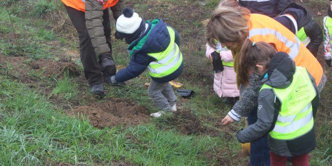 Plantation d'arbres sur le centre de stockage par les écoles de Vert-le-Grand